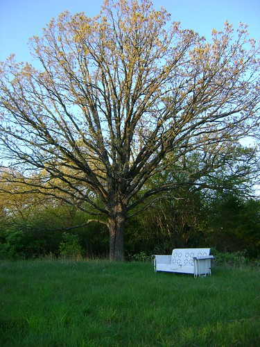 Oak Tree and Bench