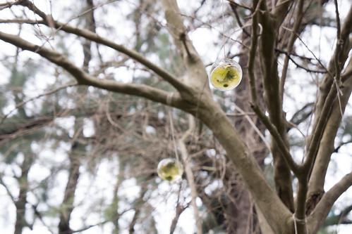 吹好的玻璃球就掛在樹上很特別