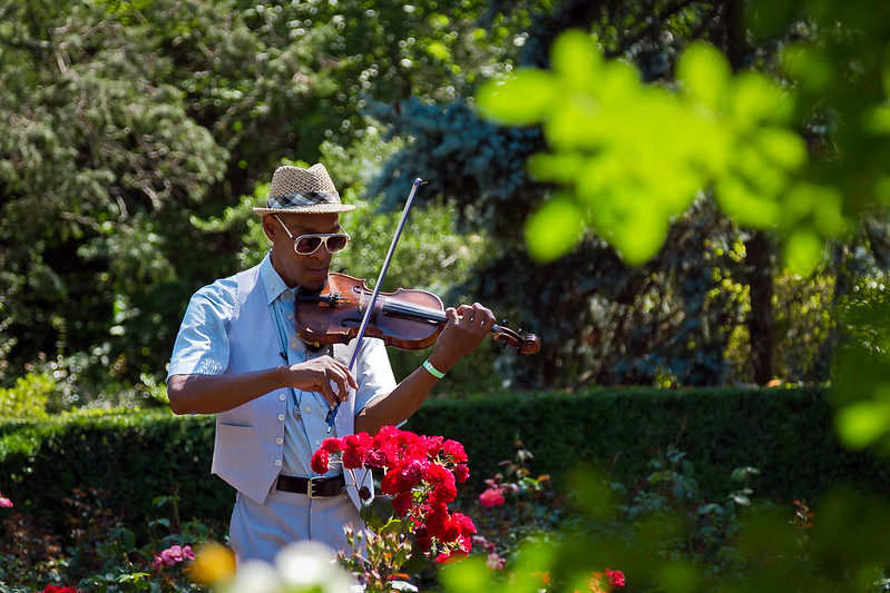 Violin music in the garden