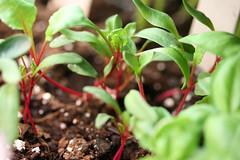 seedlings 043