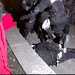 Portland Police-flying knee drop on a cuffed citizen on concrete