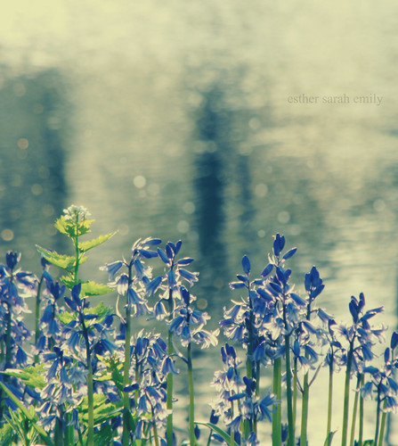 Bluebells by esther sarah emily