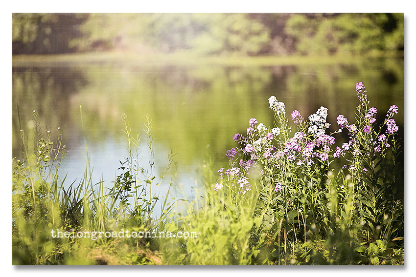 Purple WildFlowers Morning Light BLOG