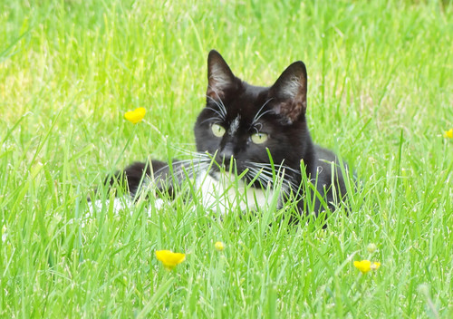 Parsley in the Buttercups