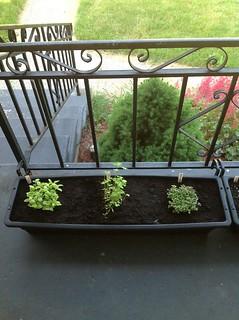 05-24-2012 Container herb garden 2