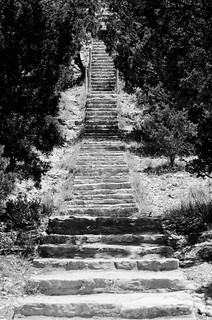 Through the Scrub (B&W)