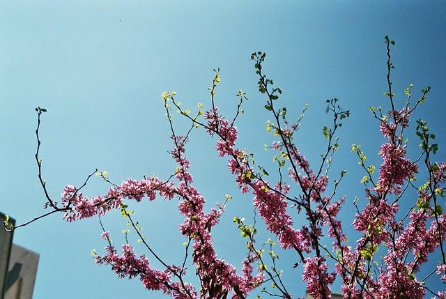 La primavera arriba a la ciutat
