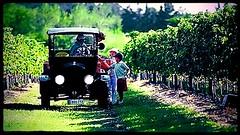 Los caminos del vino con sello uruguayo