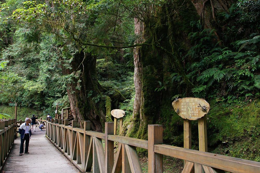 巨木群,與往拉拉山的路上-023