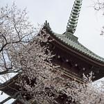0405_ueno-27
