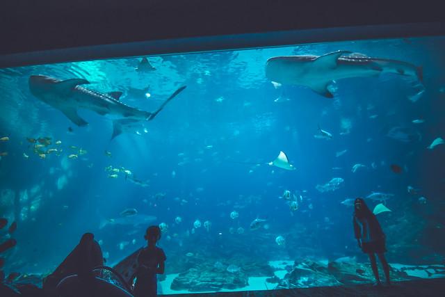 3 for 1 Sharks