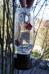 Hummingbird Feeder 9