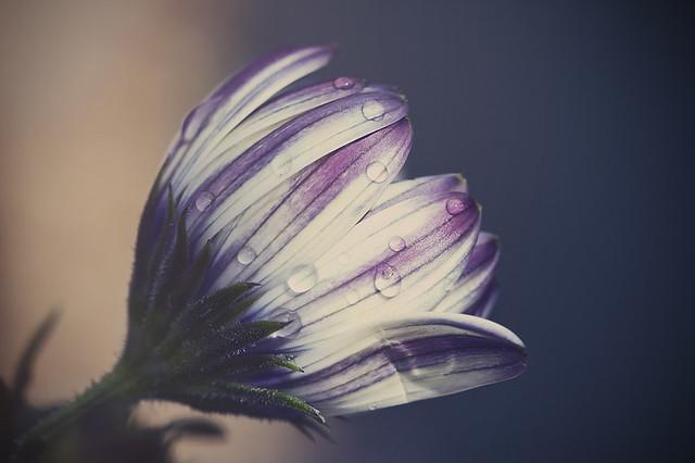 Fragile beauty