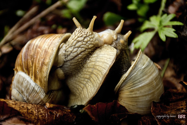 snails_in_love