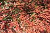 Photo:Leaves / 葉(は) By TANAKA Juuyoh (田中十洋)