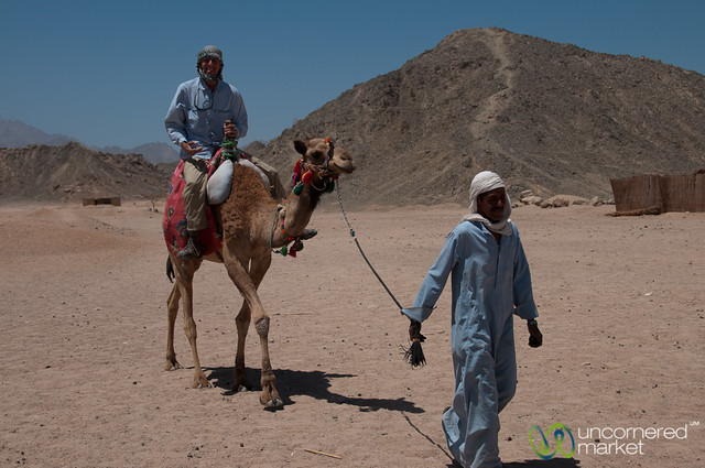 Dan Led Through the Desert on Camel - Hurghada, Egypt