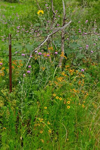 La Frontera area 6May2012 hhc_6634 by 2HPix.com - Henry Huey