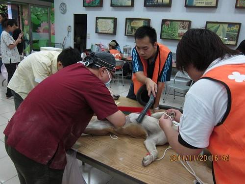台北市湖光動物醫院院長林雅哲由實務經驗得出,偏鄉民眾養狗,問題不在於教育不夠,而是資源缺乏。(圖片來源:湖光動物醫院臉書網頁)