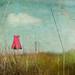 Wallflower by jamie heiden