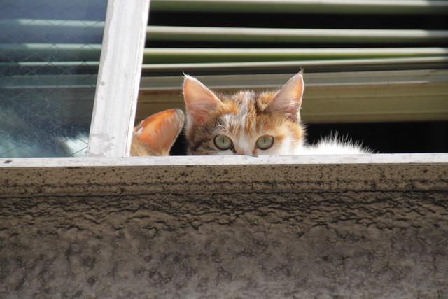 2階の窓から猫が見てた 2