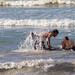 Dolphin Rescue 3