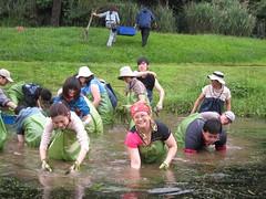 志工努力清除池中的外來種 何德華攝