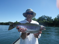 Redding local enjoys a FAT Lower Sacramento River Rainbow!