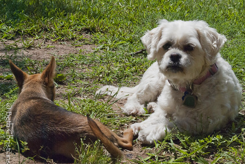 Dog Blog - 20120520-Princess Training