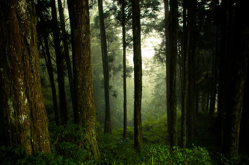Forests of Alishan-12