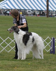 hound(0.0), afghan hound(0.0), dog sports(1.0), animal sports(1.0), animal(1.0), silken windhound(1.0), dog(1.0), sighthound(1.0), sports(1.0), pet(1.0), mammal(1.0), conformation show(1.0), borzoi(1.0),