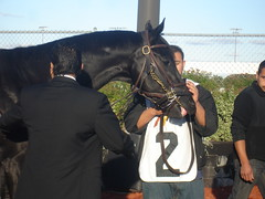 Decisive Moment before the Indiana Derby