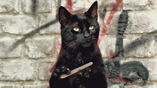 nail file cat