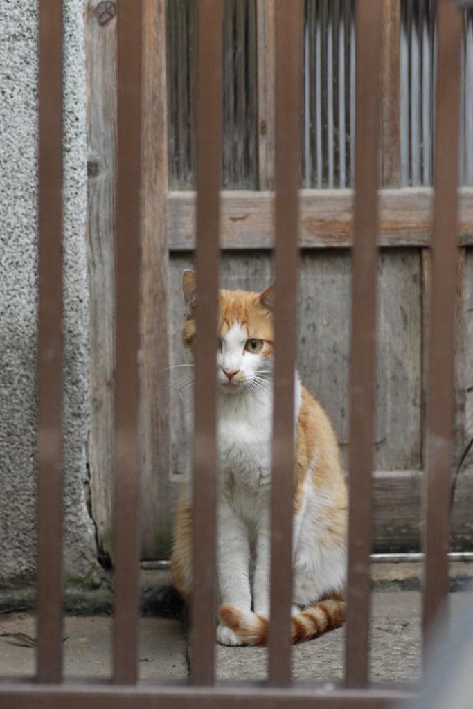 格子の向こうの茶白猫 1