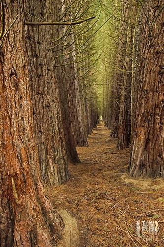 trees angel oregon ian hall images row mount sane timbered the