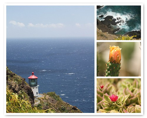 Things to see on the Makapu'u Lighthouse Trail