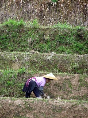C-Guangxi-Dazhai-montee (16)