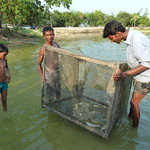 Exploring aquaculture innovation in Asia