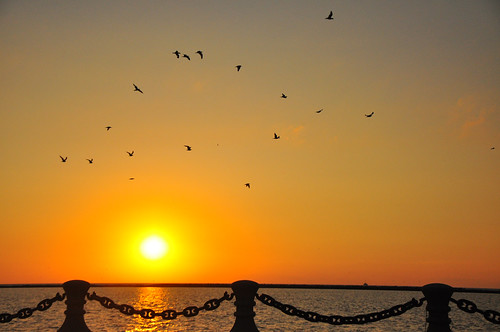 Seagull Sunset