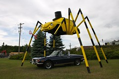 2012-6-17 Kenora big spider
