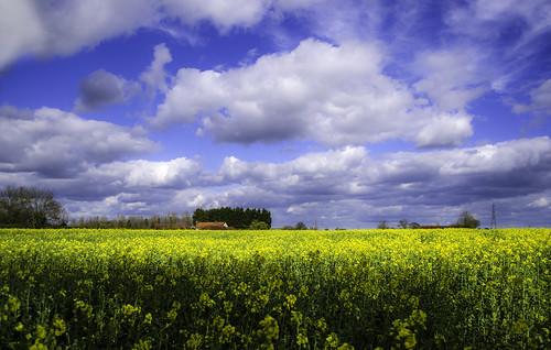 blue sky field rural spring hempstead hertfordshire hemel rapeseed