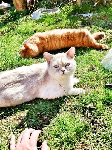 suncats sisters