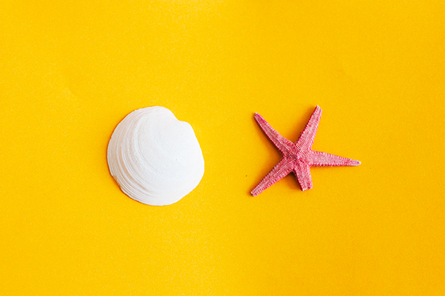 starfish and shell on yellow background