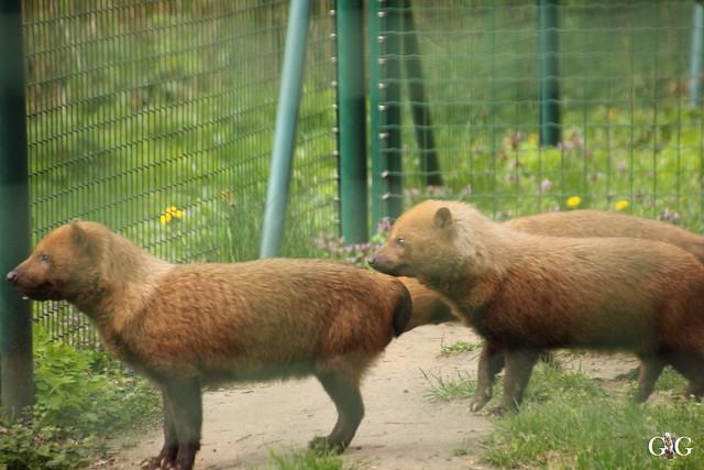 Besuch Tierpark Friedrichsfelde 17.04.201693