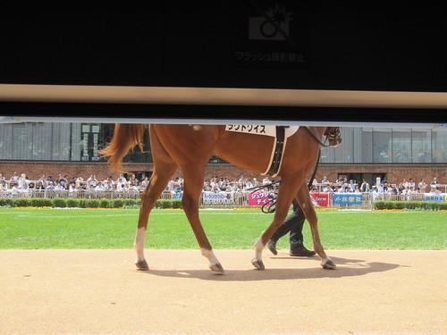 函館競馬場のダッグアウトパドックから見た馬の脚