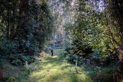 Simpson Track to Ten Mile Hollow Hik
