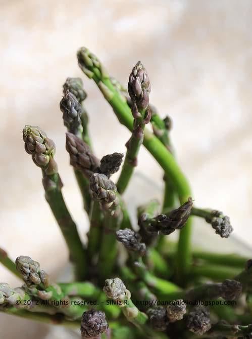 asparagi 007