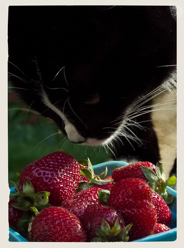 Strawberry cat-6576