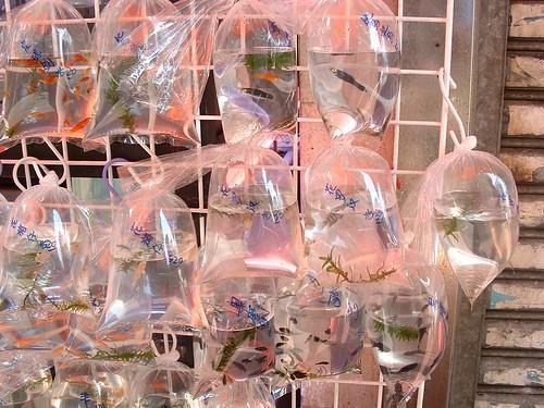 Bagged fish at the Mongkok Goldfish Markets