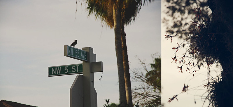 neighborhood dreams diptych