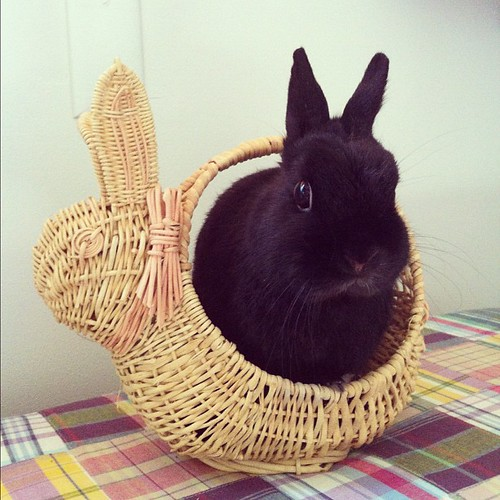 HAPPY EASTER! From my Easter bun :) by jenib320